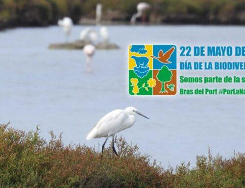 Salinas Bras del Port: Un humedal ejemplo de diversidad biológica