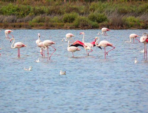 La producción de sal marina es un bello ejemplo de simbiosis industria-naturaleza