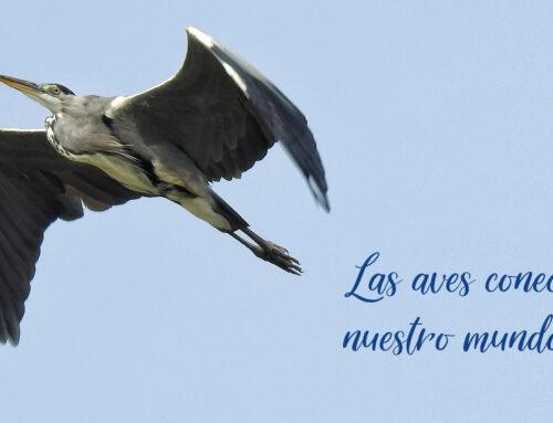 Bras del Port celebra el Día Mundial de las Aves Migratorias