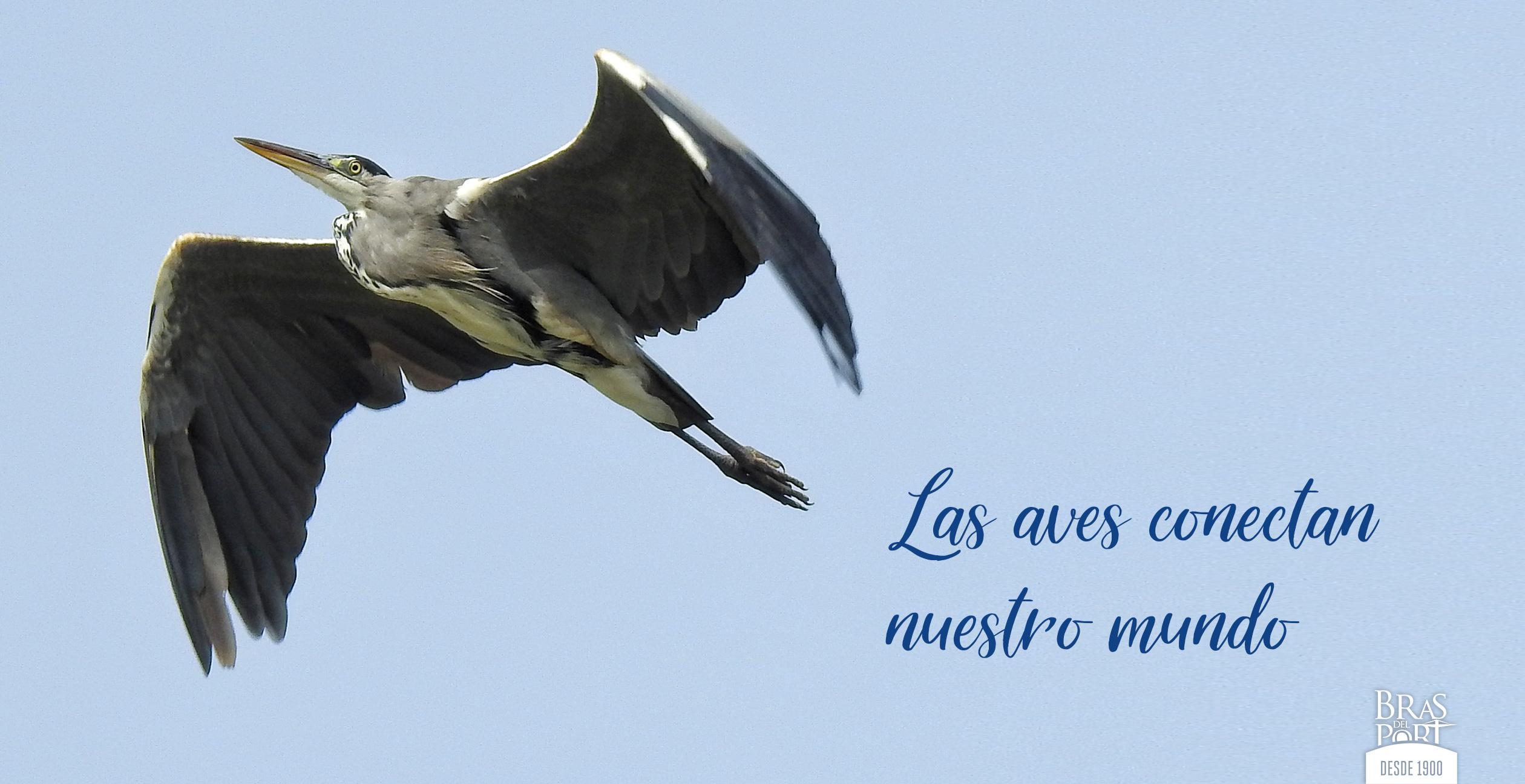 Día Mundial de las Aves Migratorias 2020